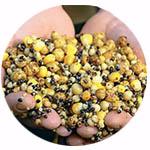 Прикормки зерновые